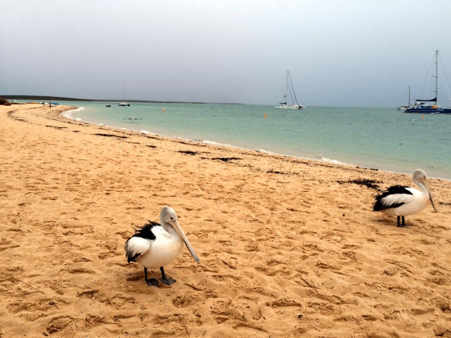 Monkey-Mia-beach.png