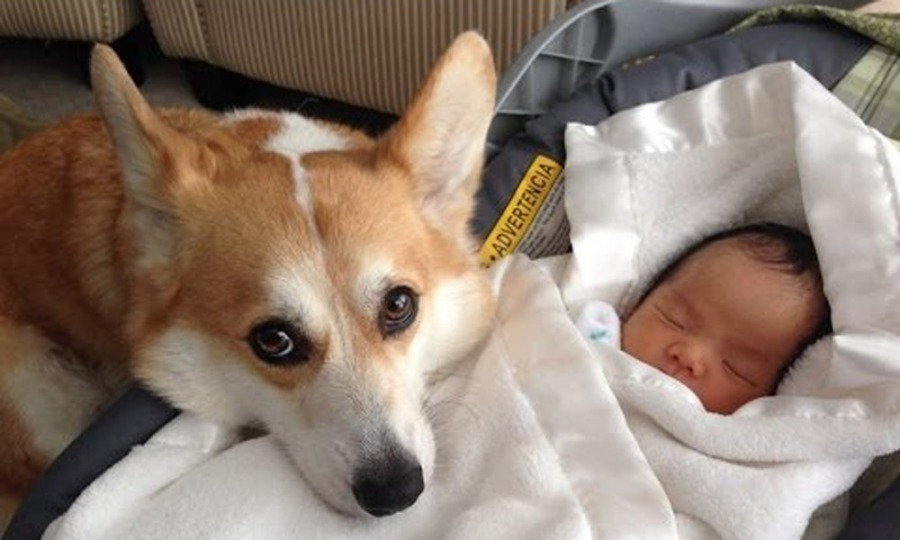 protective-dogs-2